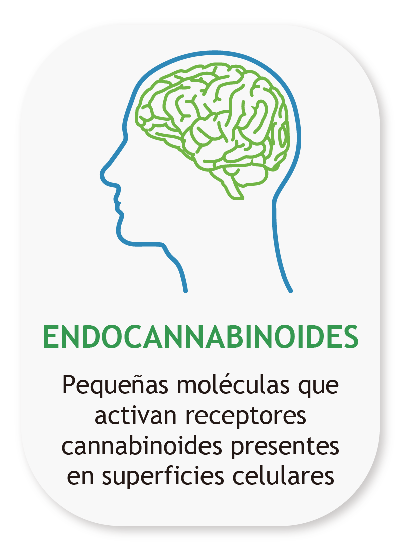 Endocannabinoides